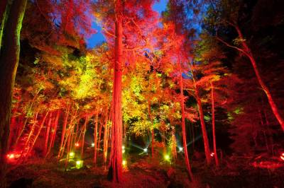 Forest gets a magical makeover