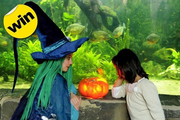 Sea Life London Aquarium, London