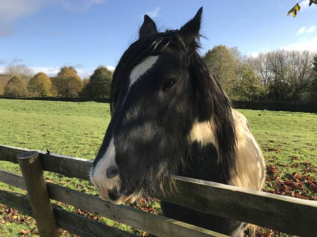 A horse comes to say hello. Image: Lauren Jarvis.