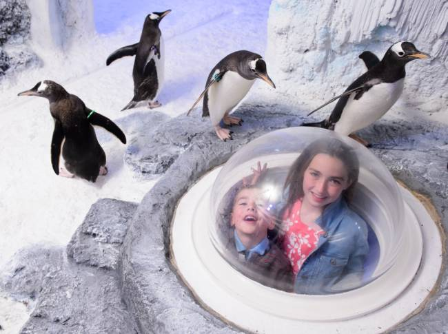 Pods offer kids a fun glimpse into the penguins' icy world